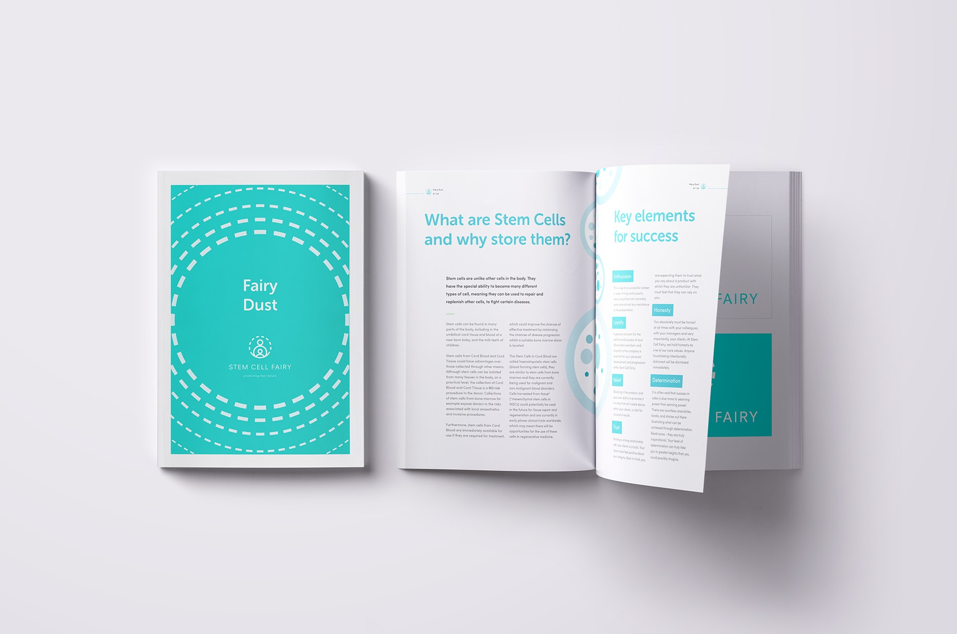Brochure Design for Stem Cell Fairy